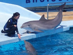 Clicker animal training a Dolphin.