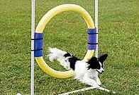 Dog agility ring jump.