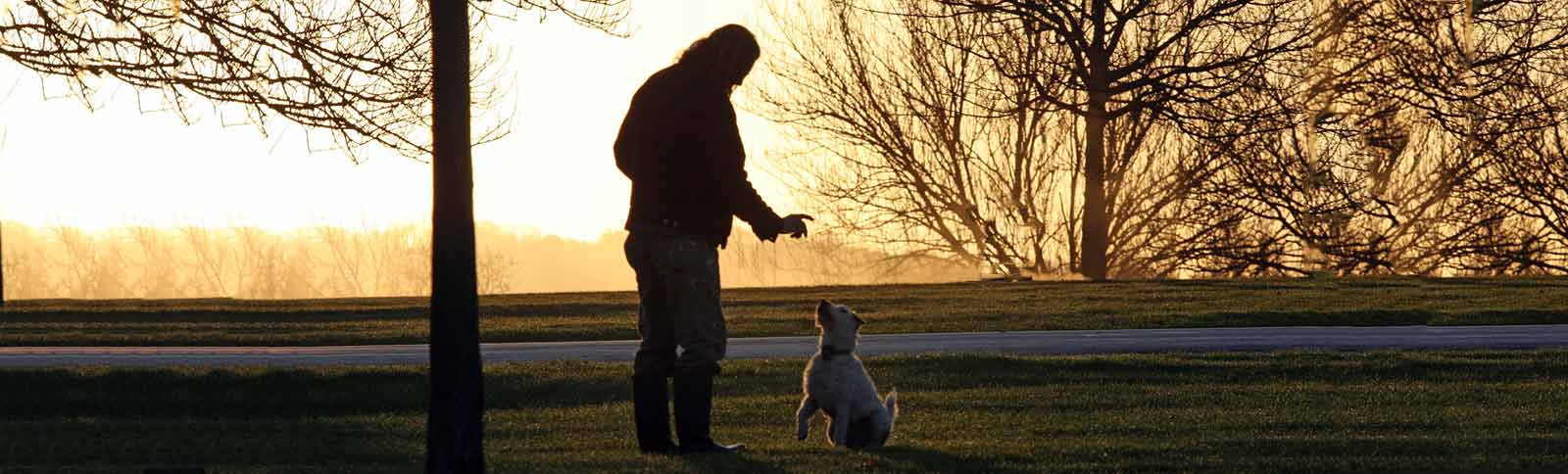 Man training a dog to sit at a park around sunrise.