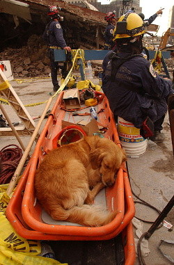 An SAR dog getting some needed rest amongst the chaos of the WTC disaster.