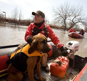 A search and rescue dog being transported by boat to search for flood victims.