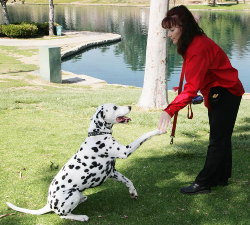 Rewarding the dog for desired behavior.